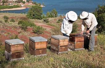 La Miellerie du Salagou nous éclaire sur les bienfaits des produits de la ruche.