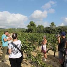 Le temps d'une journée, le public est initié à la viniculture par des experts.
