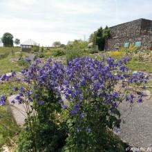 AV5C STChely Jardin copyright le jardin botanique  GT11 pied gauche