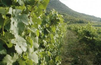 De magnifiques excursions au cœur de la viticulture locale.