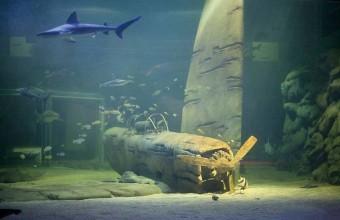 Le Requinarium, unique en Europe, accueille une trentaine d'espèces de squales.