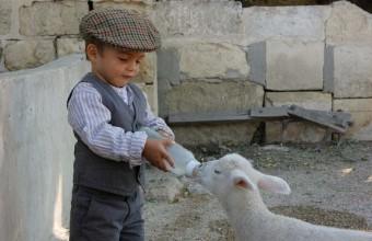 Au Vieux Mas, les enfants peuvent participer à la tétée des agneaux.