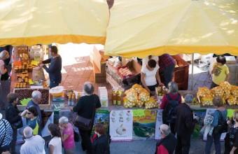 L'oignon doux des Cévennes, connu pour ses saveurs, est une des spécialités du versant méridional des Cévennes.