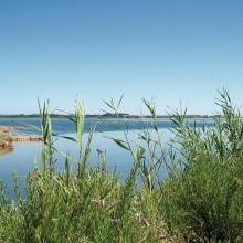 Les sept étangs palavasiens abritent une flore et une faune lagunaires exceptionnelles.