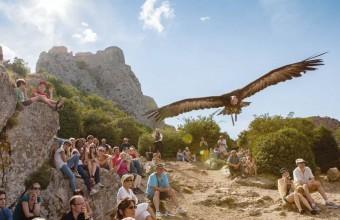 Trois fois par jour, un spectacle de fauconnerie enchante le public.