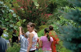 Dans un jardin extraordinaire, un jeu de piste parfumé enchantera les enfants.