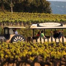 Ce petit train a été tout spécialement aménagé pour sillonner les vignes.