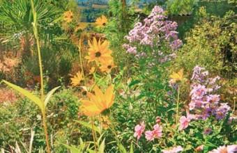 Un petit coin de paradis pour s'initier aux subtilités de la flore locale.