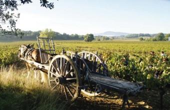 Le travail de la terre et de la vigne, une tradition solidement ancrée dans la culture méditerranéenne.