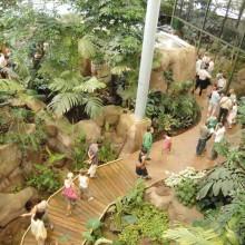 La serre amazonienne plonge toute la famille dans la forêt tropicale.