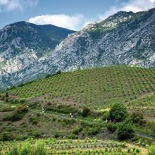 Dans l'arrière-pays du Fenouillèdes, le village de Maury se blottit au milieu des vignes.