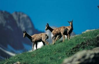 L'Andorre est un paradis pour les amoureux d'espaces sauvages.
