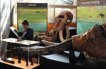 Une exposition temporaire retrace l'évolution de cet animal mythique.