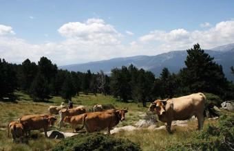 Les balades en estive permettent de découvrir le quotidien des éleveurs.