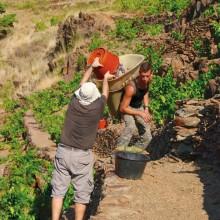 Les vignerons ont sculpté un terroir unique: le Banyuls et le Collioure