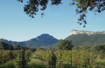 Dans l'arrière-pays montpelliérain, le Pic Saint-Loup s'entoure d'un vignoble de renommée internationale.