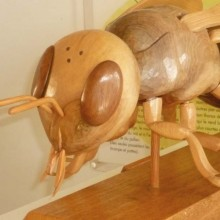 L'occasion d'en savoir un peu plus sur le monde fascinant des abeilles.
