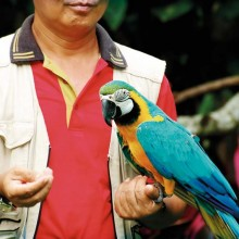 Le parc accueille plus de 400 perroquets rarissimes dans les zoos français, dont le Ara Arauna.