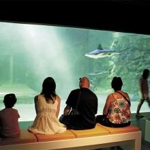Le Seaquarium n'est pas seulement un aquarium géant. C'est aussi un lieu où l'on apprend et comprend mieux la mer.